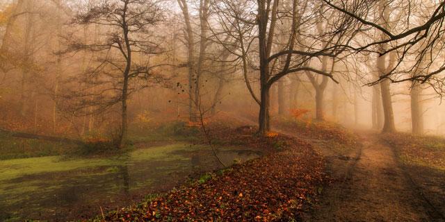 fall-picnic-scenery