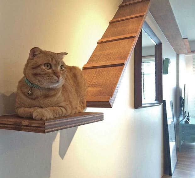 cats-in-interior-design