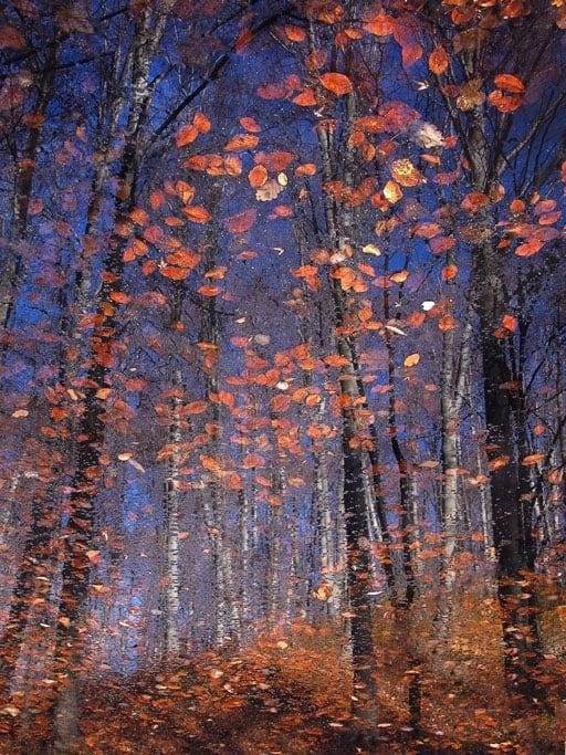 fall-foliage-walk