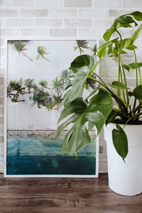 Art Work Indoor House Plants