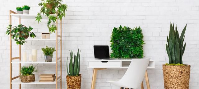 Office Indoor Plant Decor