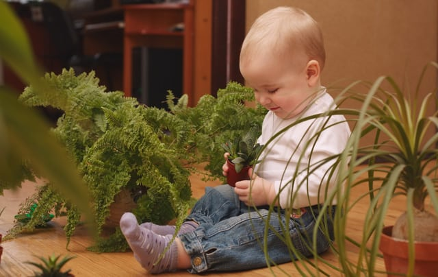 Indoor Air Filter Plants