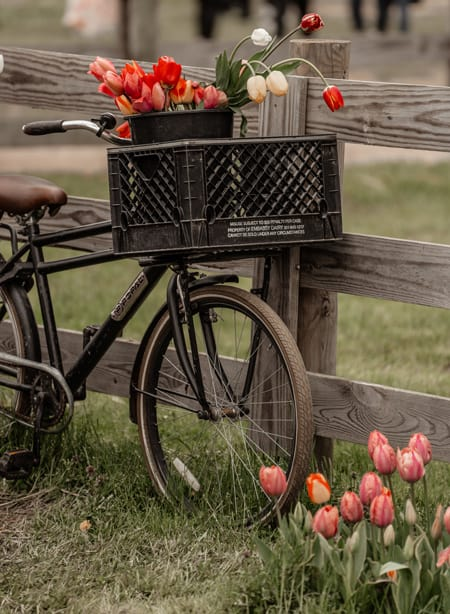 Cycling Across Lush Fields